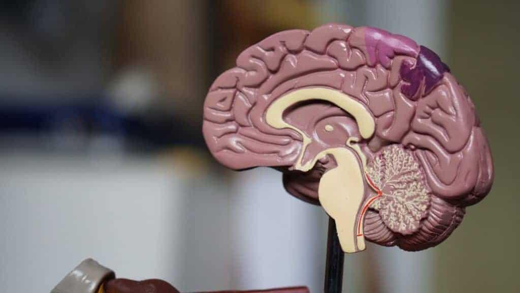 Energie in je hoofd_hersenen, darmen, Green juich, Arctic Blue, omega 3, visolie